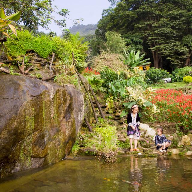 """""""Village Garden in Northern Thailand"""" stock image"""