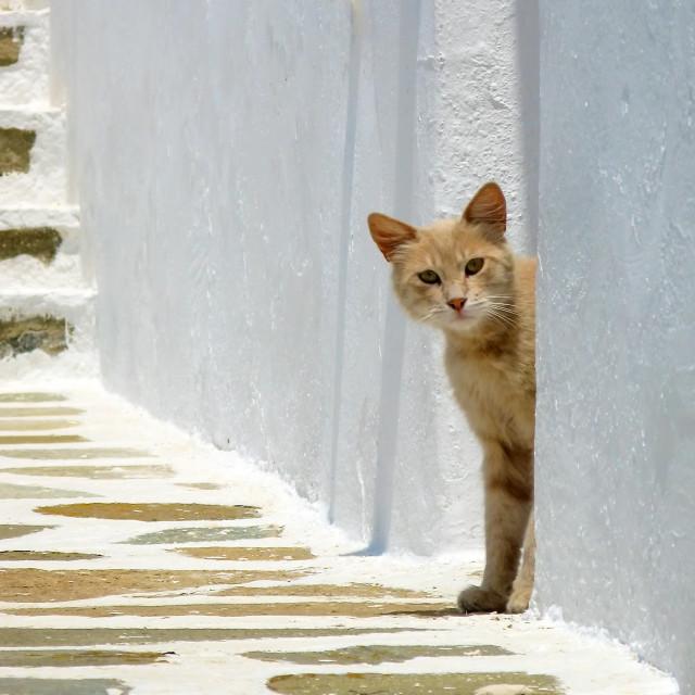 """Cat looks around a corner"" stock image"