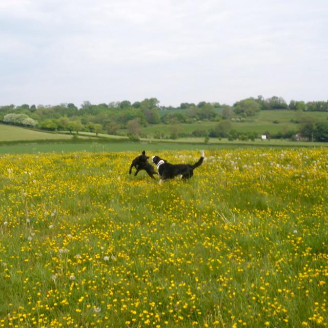 """Kent fields"" stock image"