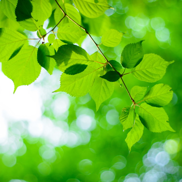 """Fresh nature and Green leafs for Backgrounds"" stock image"