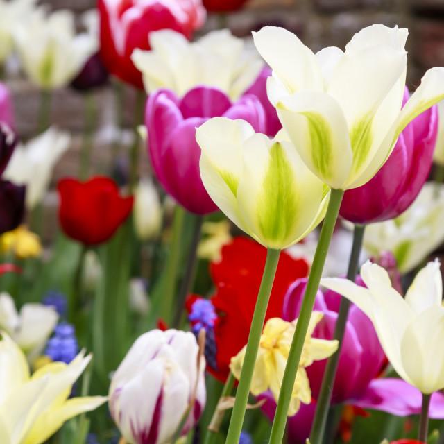 """Vivid garden flowers"" stock image"