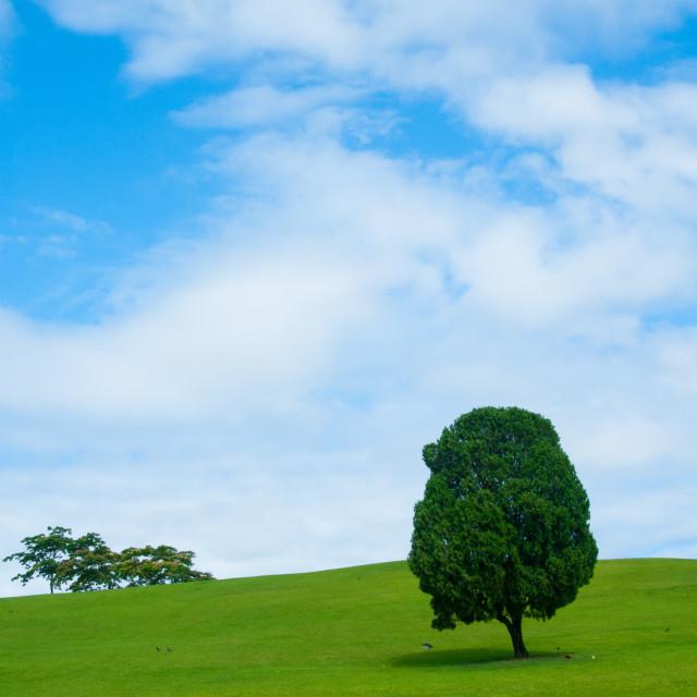"""""""Lonely Tree, Korea"""" stock image"""