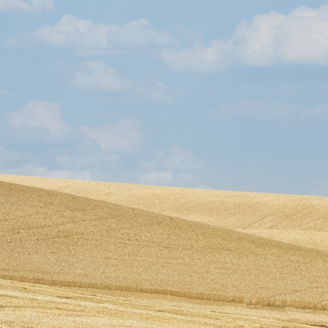 """Harvest in the Palouse"" stock image"
