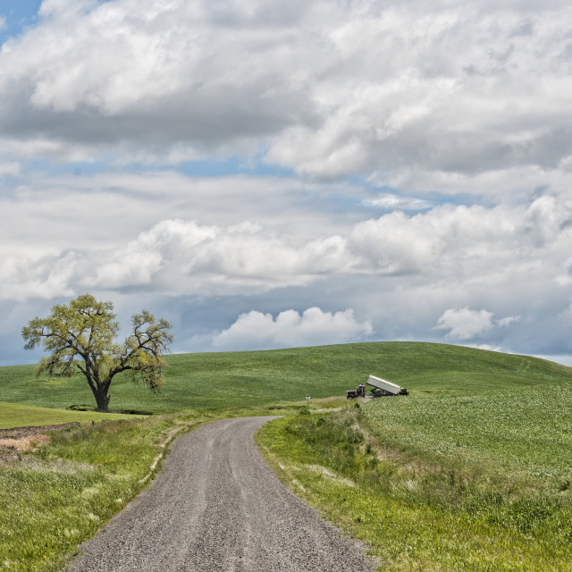 """Lone tree on the Palouse"" stock image"