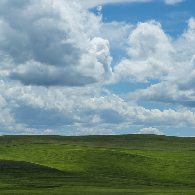 """Rolling hills of the Palouse"" stock image"