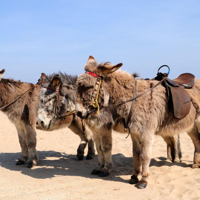 """""""Donkey Rides ."""" stock image"""