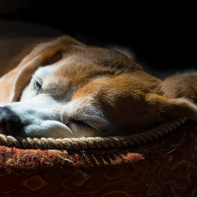 """Dog Tired"" stock image"