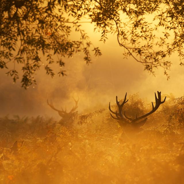 """enchanting"" stock image"