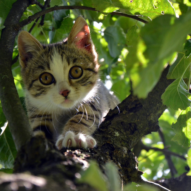 """Kitten on a tree"" stock image"