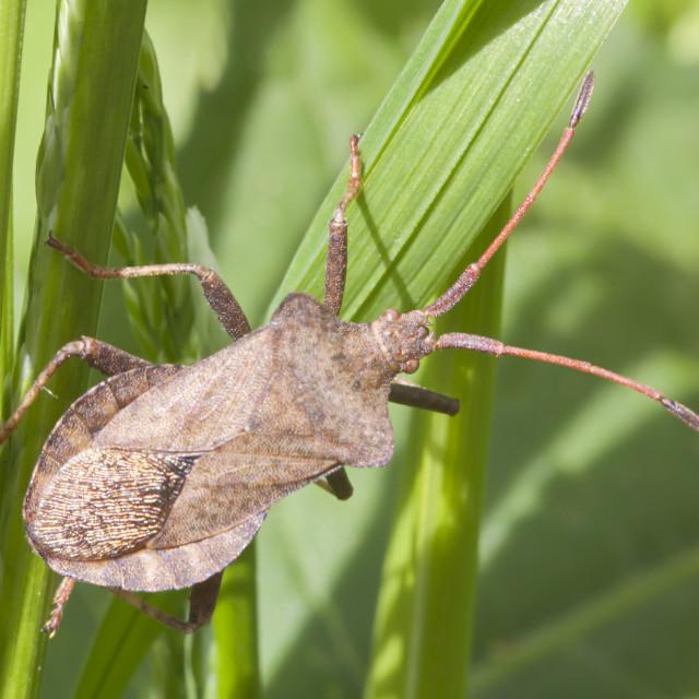 """""""Bug on grass"""" stock image"""
