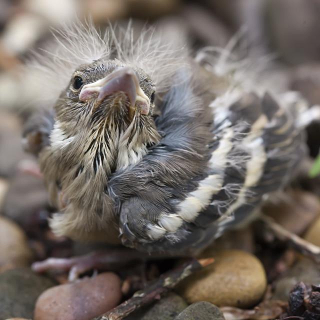 """Baby bird"" stock image"