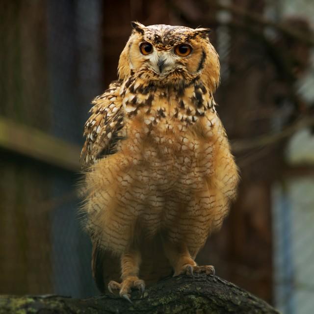 """Owl love"" stock image"
