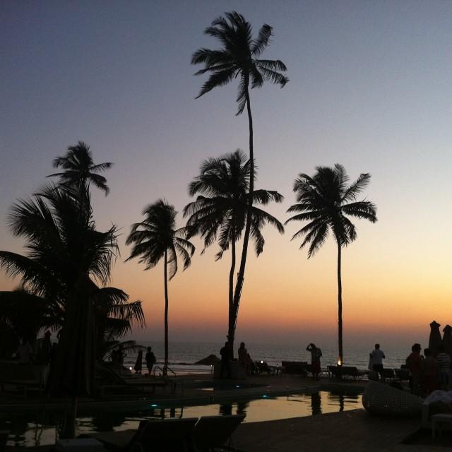 """""""Palm Tree Skyline"""" stock image"""