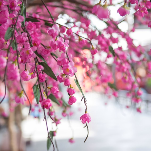 """""""Flower decorated in shopping mall"""" stock image"""