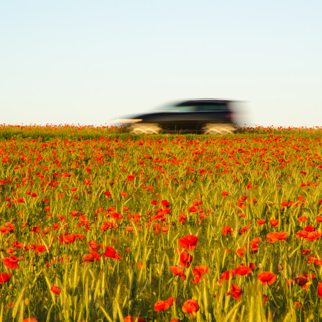 """Car in a field with poppeis"" stock image"