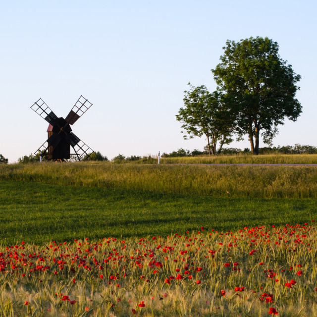 """Landscape with poppies and windmill"" stock image"