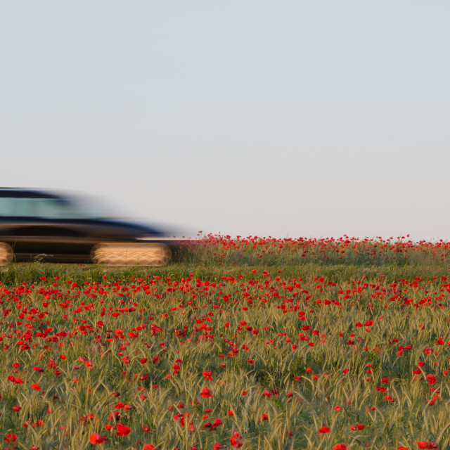 """Travel by car in a poppy field"" stock image"