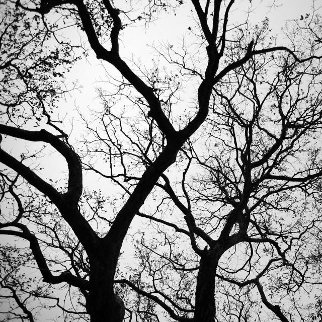 """Trees"" stock image"