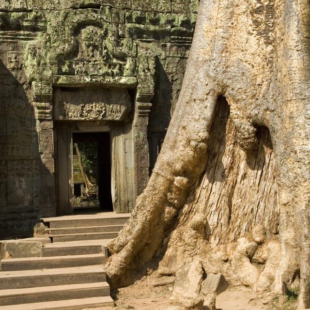 """""""Ta Prohm Temple Ruins"""" stock image"""