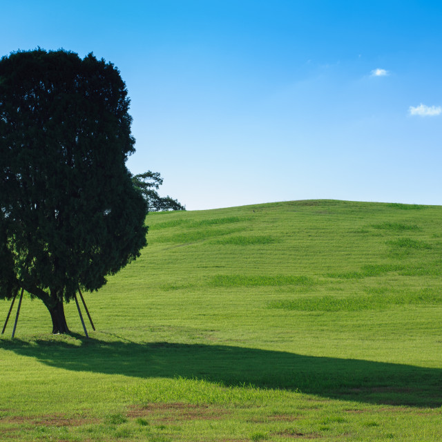 """Lonely Tree, Korea"" stock image"