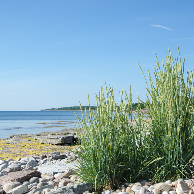 """Coastal Grass"" stock image"