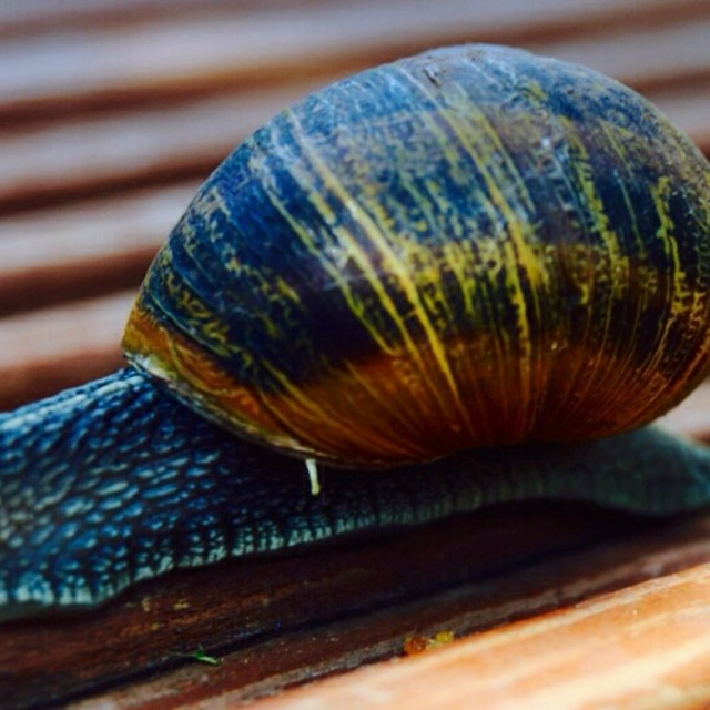 """Snails pace"" stock image"
