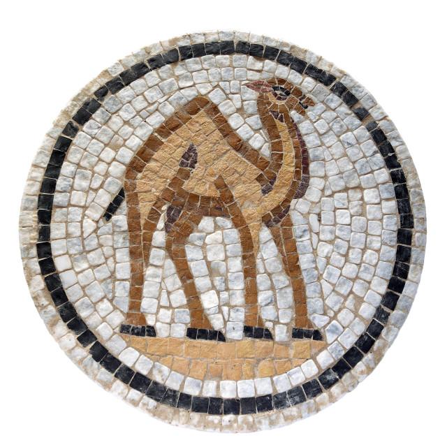 """""""Mosaic Camel"""" stock image"""