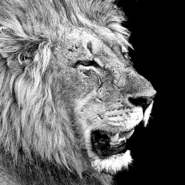"""Beast"" stock image"