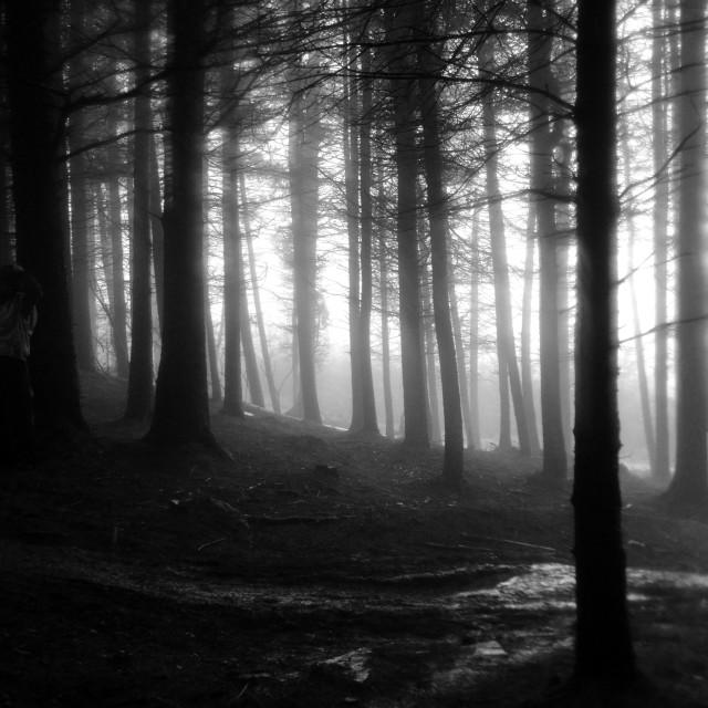 """Misty Morning Wanderer"" stock image"