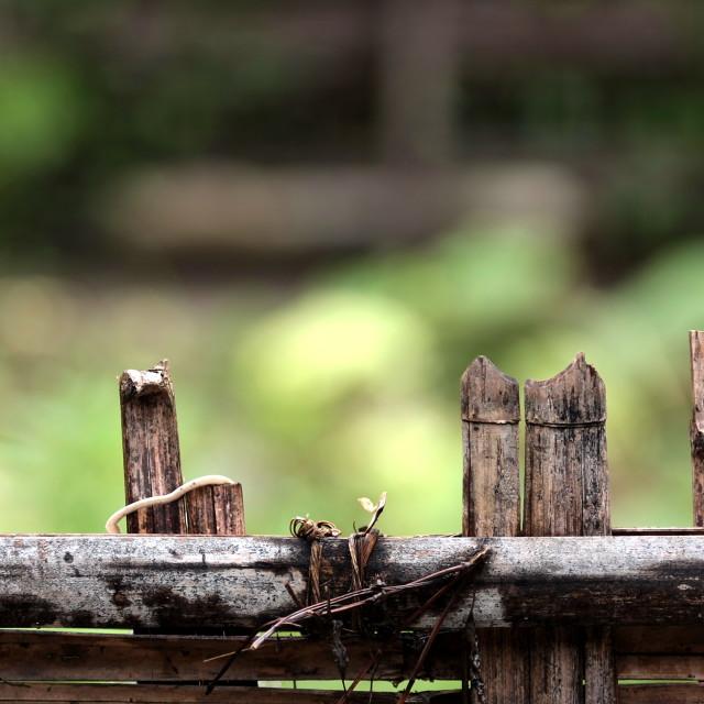 """""""Bamboo fence"""" stock image"""