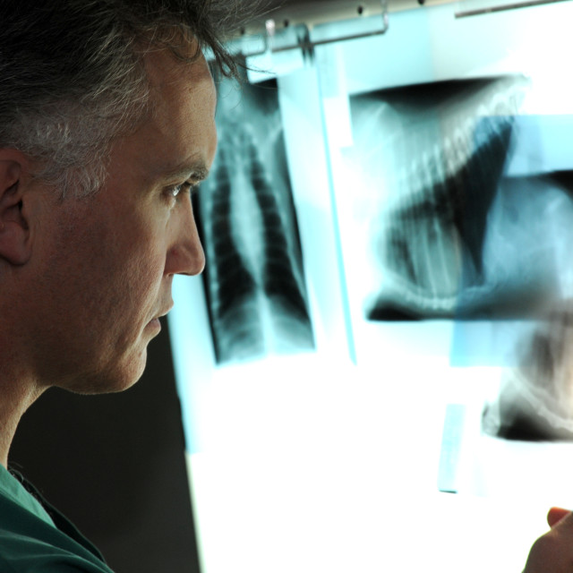 """Vet and X-ray"" stock image"