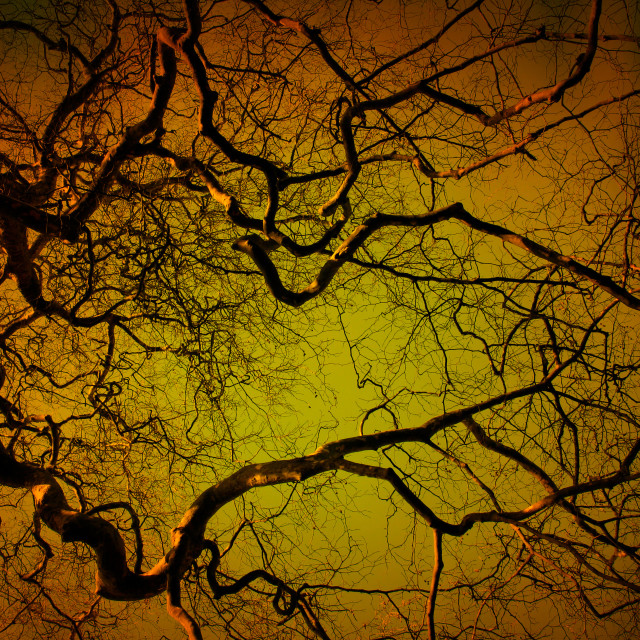 """Tree at night"" stock image"