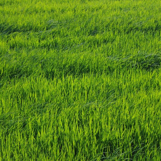 """Verde que te quiero verde"" stock image"