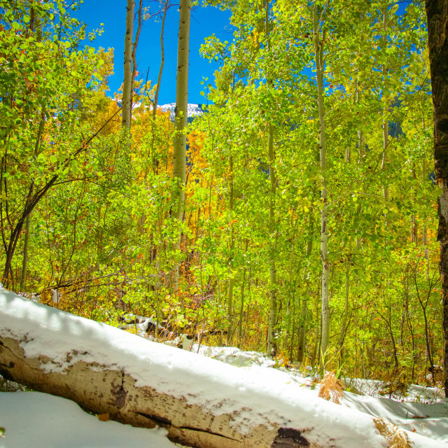 """Fall snow in Aspen"" stock image"