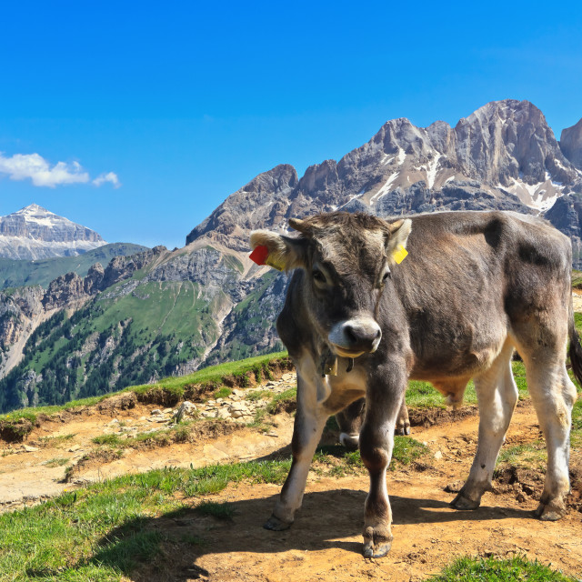 """Dolomiti - alpine pasture"" stock image"