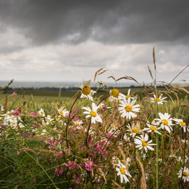"""Moody Wildflowers"" stock image"