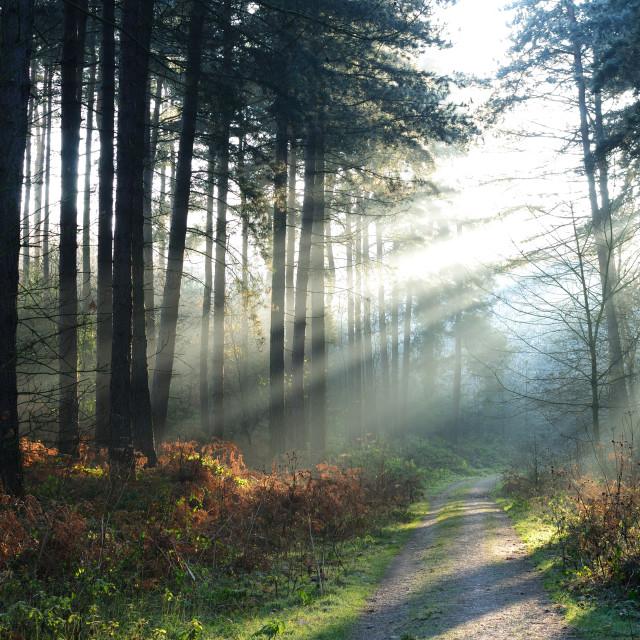 """""""Sherwood Pines ."""" stock image"""