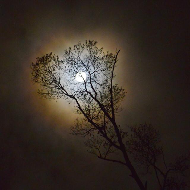 """Moonlight Shadow"" stock image"