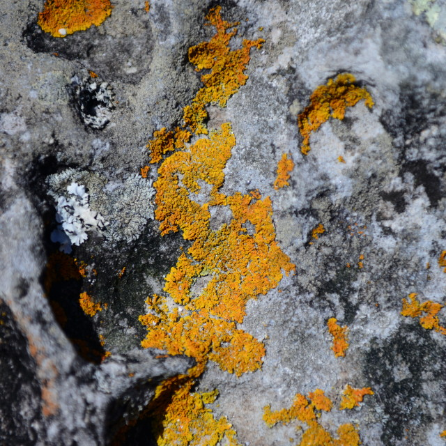 """Orange Lichen Rocks"" stock image"