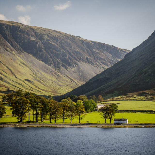 """""""Buttermere Trees - 3"""" stock image"""