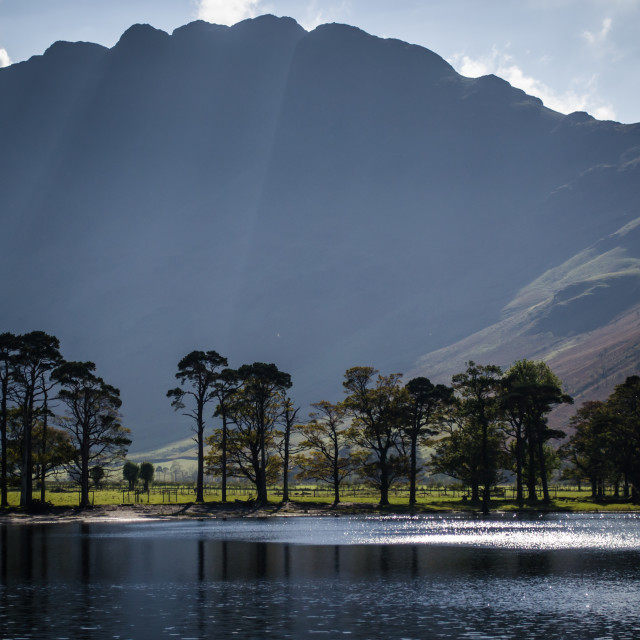 """""""Buttermere Trees - 1"""" stock image"""