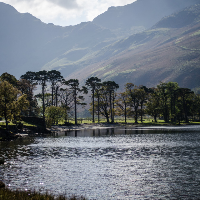 """""""Buttermere Trees - 2"""" stock image"""