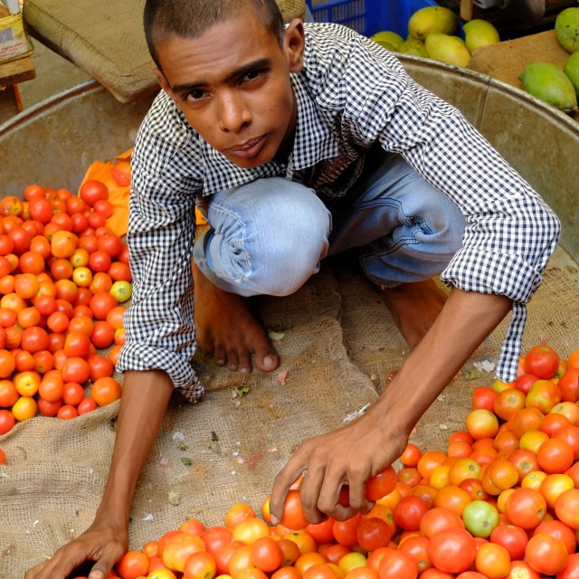 """Boy selling tomatoes in market, India"" stock image"