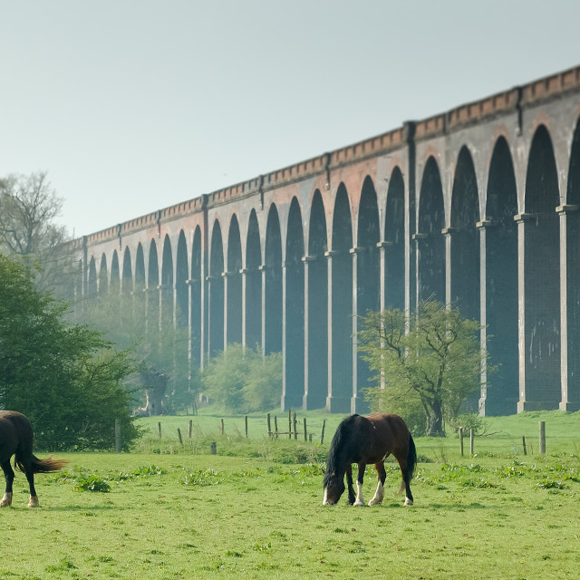 """""""Horses grazing by Harringworth viaduct"""" stock image"""