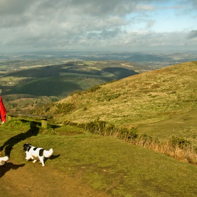 """Walking dogs on the Malvern Hills"" stock image"