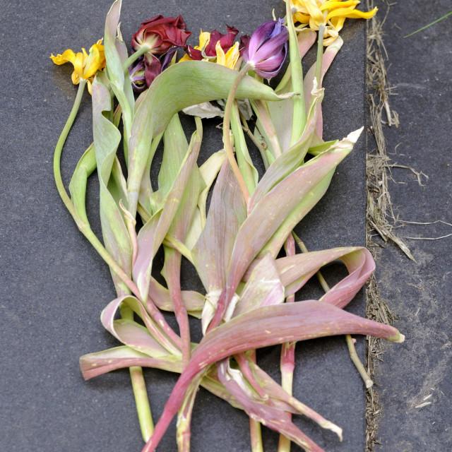 """Dead flowers"" stock image"