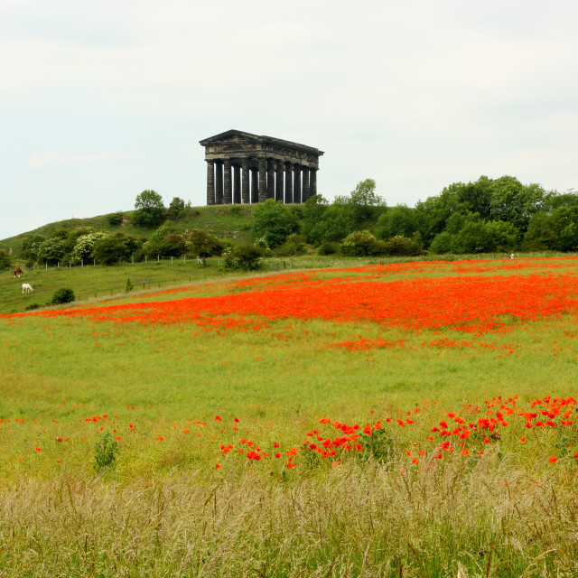 """""""Poppies at Penshaw Monument"""" stock image"""