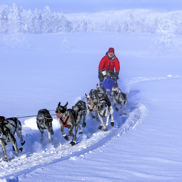 """Dog Sled"" stock image"