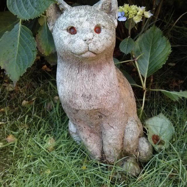 """Stone Cat"" stock image"