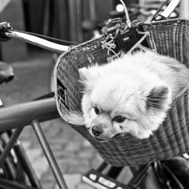 """Dog on the bike"" stock image"